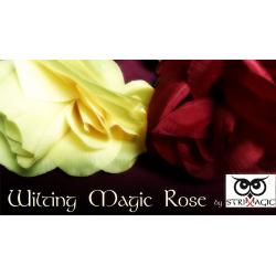 Wilting Rose by Strixmagic - Trick wwww.magiedirecte.com